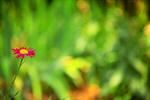 Сlipart summer spring scene gardening garden photo  BillionPhotos