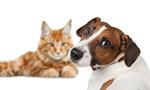 Сlipart dog cat two fun mammal   BillionPhotos