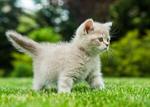 Сlipart Domestic Cat Kitten Pets Grass Cute photo  BillionPhotos