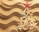 Сlipart christmass tree beach tree shell coast photo  BillionPhotos