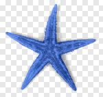 Сlipart star fish starfish white closeup photo cut out BillionPhotos