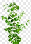 Сlipart plant green greenery houseplant leaves photo cut out BillionPhotos