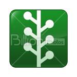 Сlipart newsvine Social Media social button Sharing Bookmark vector icon cut out BillionPhotos