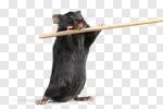 Сlipart Risk Mousetrap Mouse Humor Danger photo cut out BillionPhotos