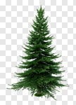 Сlipart Christmas Tree Tree Christmas Fir Tree Pine Tree 3d cut out BillionPhotos