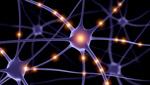 Сlipart Nerve Cell Brain Human Nervous System Science Synapse 3d  BillionPhotos
