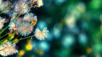 Сlipart Dandelion Wildflower Field Flower Meadow photo  BillionPhotos