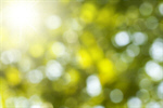 Сlipart sunlight tree green yellow sunny photo  BillionPhotos
