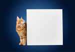 Сlipart dog cat sign around pets   BillionPhotos