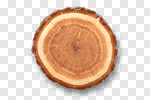 Сlipart Wood Tree Tree Ring Log Tree Trunk photo cut out BillionPhotos