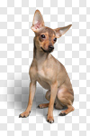 Сlipart Dog Humor Summer Chihuahua Spring photo cut out BillionPhotos