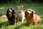 Сlipart Dog Domestic Cat Puppy Kitten Animal photo  BillionPhotos