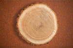 Сlipart Wood Tree Tree Ring Log Tree Trunk   BillionPhotos