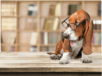 Сlipart Dog Glasses Humor Intelligence Animal   BillionPhotos