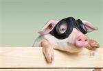 Сlipart animals pig piglet head isolated   BillionPhotos