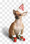 Сlipart Christmas Dog Humor Santa Hat Animal photo cut out BillionPhotos