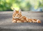 Сlipart cat adorable amazing animal background   BillionPhotos