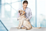Сlipart dog veterinarian white medical examination   BillionPhotos