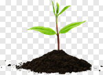 Сlipart Plant Growth Leaf Seedling Planting photo cut out BillionPhotos