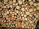 Сlipart Timber Wood Log Firewood Tree photo  BillionPhotos