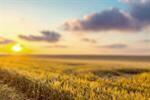 Сlipart harvesting harvest grain field rye photo  BillionPhotos