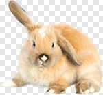 Сlipart Rabbit Easter Bunny Animal Pets Baby Rabbit photo cut out BillionPhotos