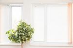 Сlipart Window Living Room Indoors White Domestic Room photo  BillionPhotos