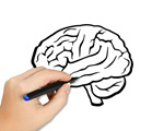 Сlipart brain diagram human psychology science   BillionPhotos