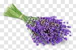 Сlipart Lavender Bouquet Lavender Coloured Flower Isolated photo cut out BillionPhotos