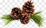 Сlipart Pine Pine Cone Christmas Decoration Decoration Isolated photo cut out BillionPhotos