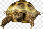 Сlipart Turtle Rocket Bizarre Efficiency Development photo cut out BillionPhotos