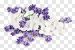 Сlipart flowers bunch white apothecary isolated photo cut out BillionPhotos