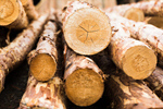 Сlipart Lumber Industry Deforestation Log Wood Tree photo  BillionPhotos