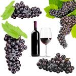 Сlipart Grape Vineyard Vine Bunch Leaf   BillionPhotos