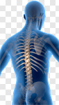 Сlipart Human Spine Back The Human Body Body Posture 3d cut out BillionPhotos