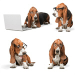 Сlipart Dog Computer Pets Shopping Animal   BillionPhotos