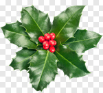Сlipart Holly Christmas Berry Fruit Leaf christmas holly photo cut out BillionPhotos