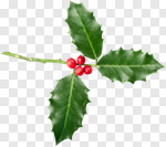 Сlipart Holly Christmas Twig Isolated Leaf photo cut out BillionPhotos