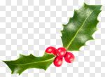 Сlipart Holly Christmas Berry Leaf Isolated photo cut out BillionPhotos