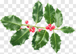 Сlipart Christmas Holly Holiday Christmas Decoration Berry photo cut out BillionPhotos