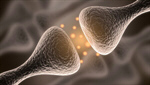Сlipart Nerve Cell Synapse Brain Human Nervous System Receptor 3d  BillionPhotos