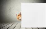Сlipart cat sign isolated around pets   BillionPhotos