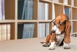 Сlipart Dog Glasses books library Humor   BillionPhotos