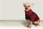 Сlipart Dog Humor winter clothes Chihuahua   BillionPhotos