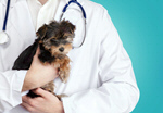 Сlipart Vet Dog Veterinary Medicine Pets Puppy   BillionPhotos