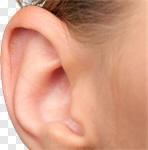 Сlipart Human Ear Listening Sound Sensory Perception Using Senses photo cut out BillionPhotos
