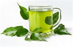 Сlipart Tea Green Tea Tea Cup Cup Tea Leaves photo  BillionPhotos