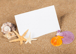 Сlipart Postcard Vacations Beach Shell Summer photo  BillionPhotos