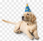 Сlipart birthday adorable golden pet dog photo cut out BillionPhotos