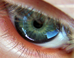 Сlipart Eyeball Biometrics Iris Retina Human Eye photo free BillionPhotos